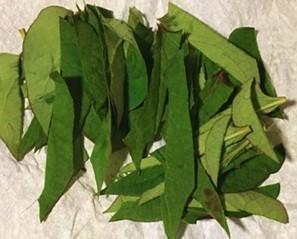 ドクダミの葉.jpg
