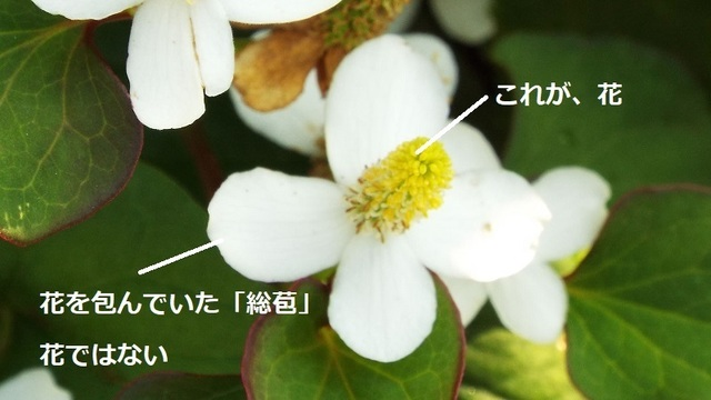 dokudami02_01-1.jpg